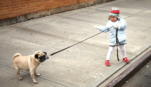 A young kid holding a leash of a pet dog. Graphic used for the blog post on how to earn money online as a kid fast