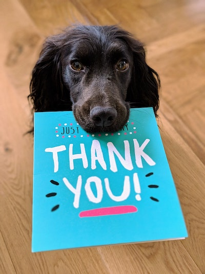 thank you for money gift - dog holding a card saying thank you